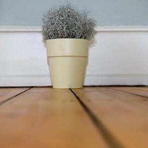 Pflanze, grau, blau, grau-blau, Holzboden